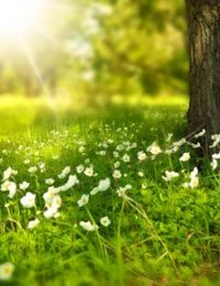 spring-tree-flowers-meadow-60006-1024x651